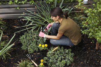 Community Garden Day